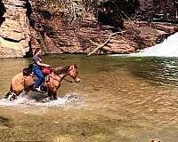 trail-quarter-horse
