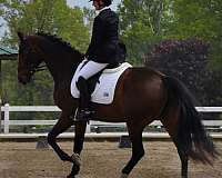 bay-interupted-stripe-two-white-socks-horse