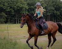 oldenburg-horse