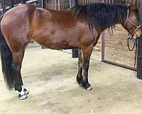 star-hind-pasterns-horse