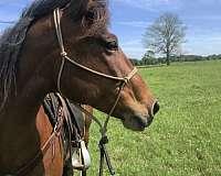 bay-mustang-horse