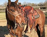 bay-mare-mustang-horse
