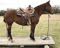 blm-mustang-horse