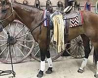 mustang-horse
