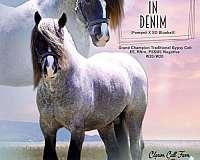 piebald-blue-eyed-horse