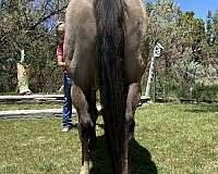 easy-quarter-horse