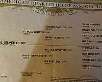 stop-quarter-horse