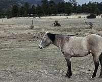 ranch-quarter-horse