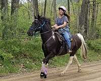 smooth-tennessee-walking-horse