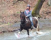 trail-horse-tennessee-walking