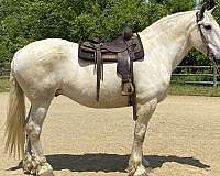 ranch-work-shire-horse