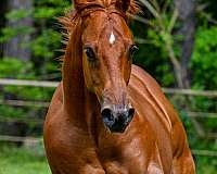 awesome-yearling