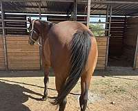 puppy-dog-personality-quarter-horse