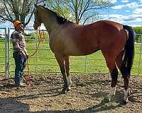 all-around-thoroughbred-horse