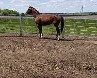 cowboy-mounted-shooting-thoroughbred-horse