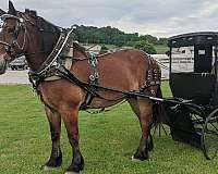 or-trail-belgian-horse
