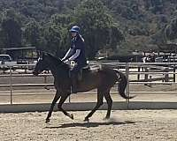 lovely-movement-mare