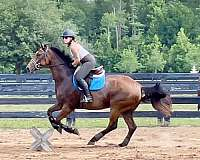 left-hind-pastern-horse