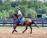 right-hind-ankle-horse