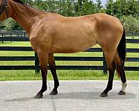 bay-left-hind-pastern-horse