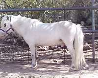 colored-foals-stallion