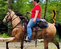 all-around-tennessee-walking-horse