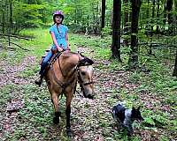 athletic-tennessee-walking-horse