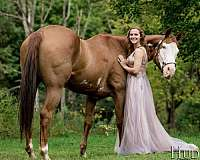 roping-paint-pinto-horse