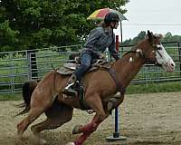 team-roping-paint-pinto-horse