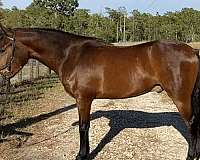 hind-white-pastern-horse