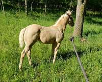 on-the-line-filly