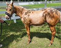 vaccinations-filly