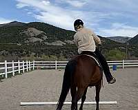 local-andalusian-horse