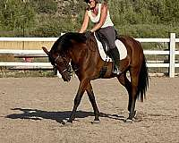 schooling-shows-andalusian-horse