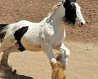 white-with-black-horse