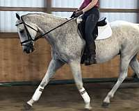 low-level-eventing-thoroughbred-horse