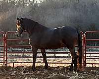 carriage-driving-prospect-horse