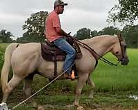 easy-to-sit-quarter-horse