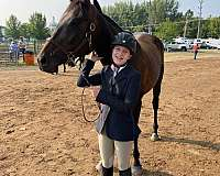 show-experience-thoroughbred-horse