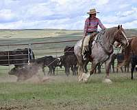 cowboy-mounted-shooting-gypsy-vanner-horse