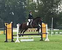eventing-thoroughbred-horse