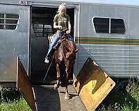 trail-class-competition-rocky-mountain-horse