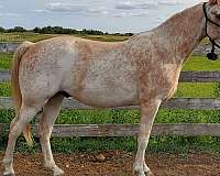 rmh-single-footing-horse