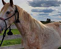 twh-single-footing-horse