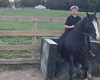 trail-class-competition-crossbred-pony