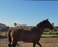 reining-andalusian-horse