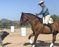 gait-andalusian-horse