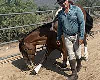simple-andalusian-horse