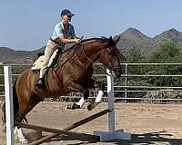 energetic-andalusian-horse