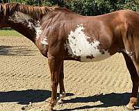 small-horse-paint